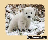 Белый медведь,медвежонок,белый медвежонок